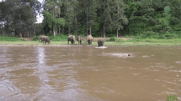 elephant-khamla-rescue-1