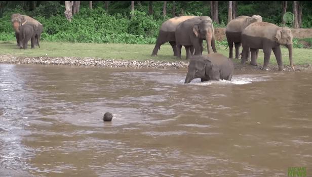 elephant-khamla-rescue-2