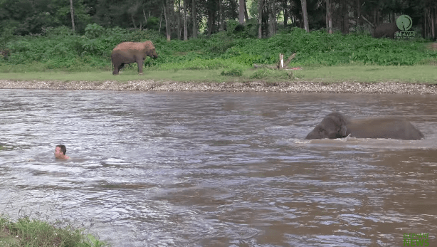 elephant-khamla-rescue-3