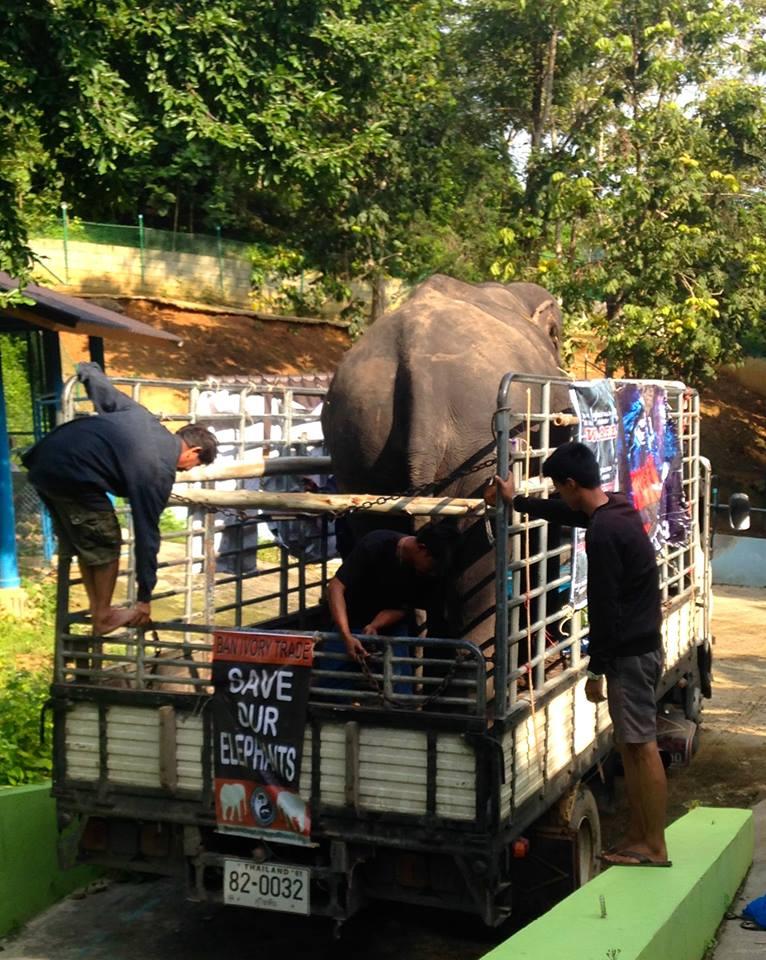 elephant_nwon_rescue_2