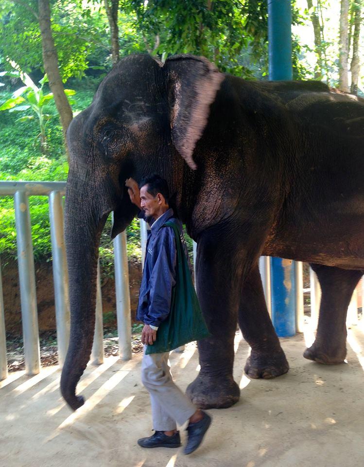 elephant_nwon_rescue_3