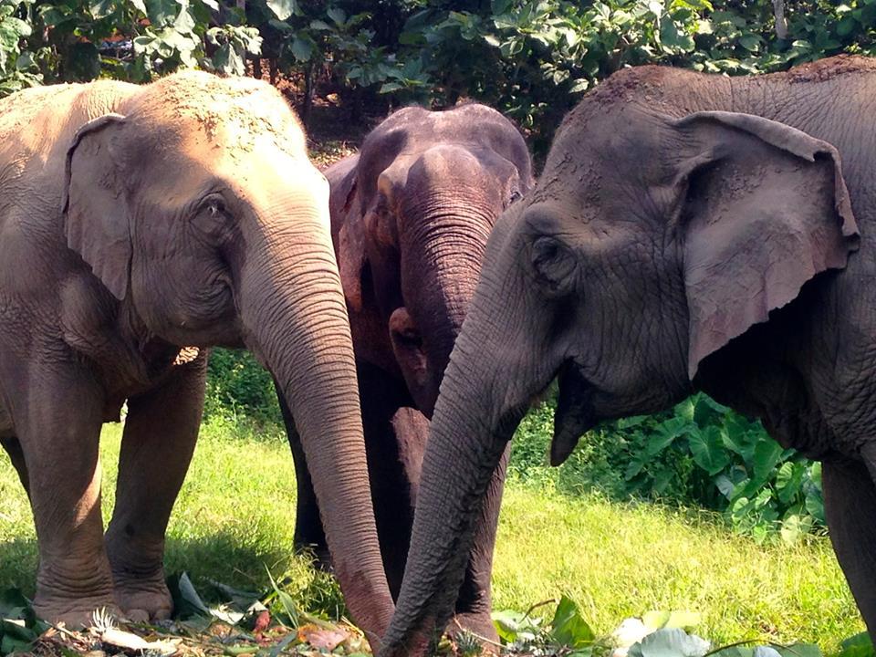elephant_nwon_rescue_4