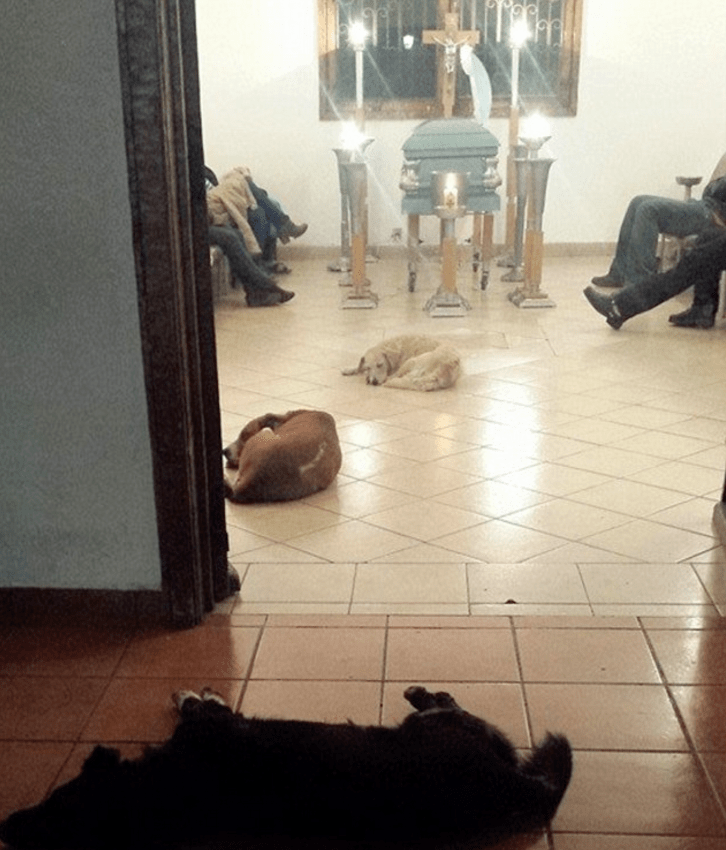 funeral-dogs-stray-1