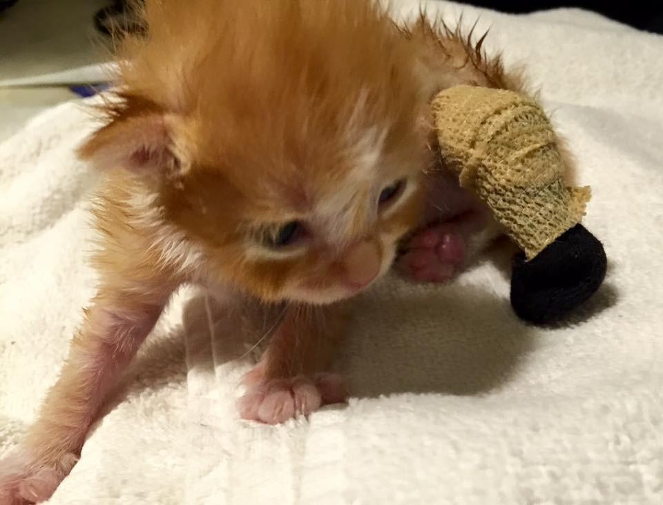 kitten-tapani-legs-2