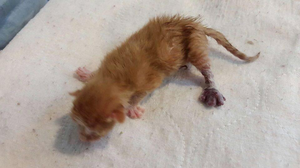 kitten-tapani-legs-4