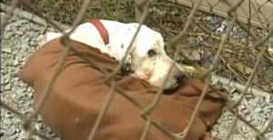 sheepdog_rescue_quebec_1