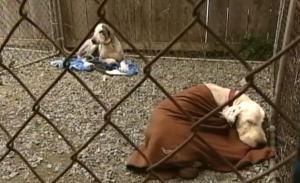 sheepdog_rescue_quebec_3