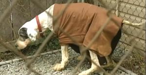 sheepdog_rescue_quebec_4