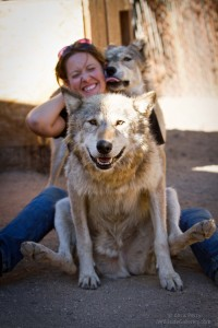 wolves_koda_chance_1