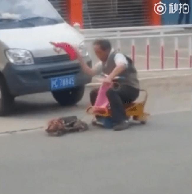 cart_whip_dog_china_1