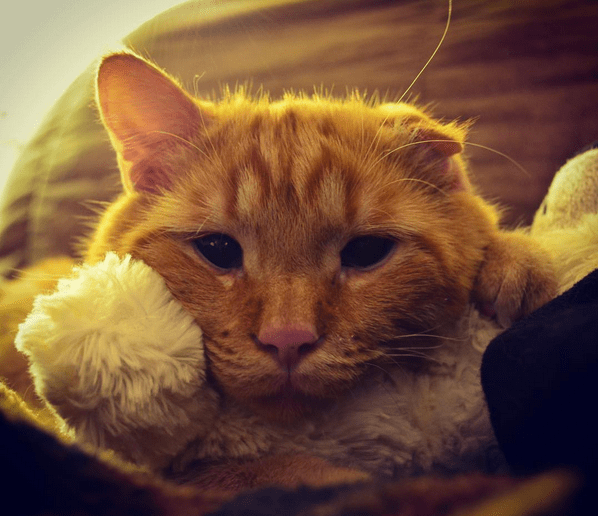 cat-benben-rescue-1