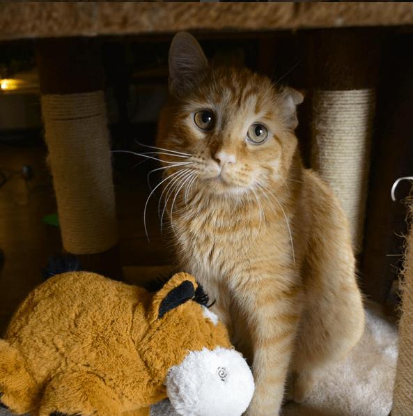 cat-benben-rescue-2
