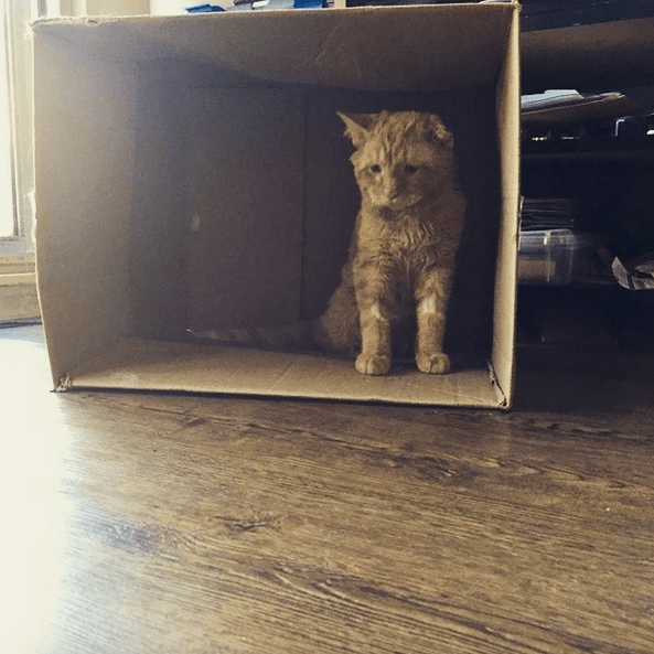 cat-benben-rescue-6