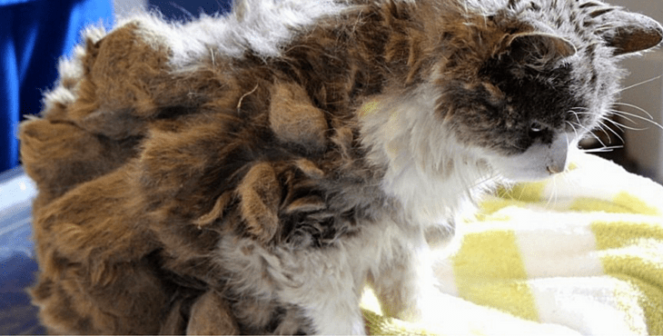 cat-cover-matted-fur