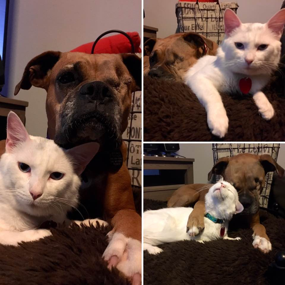 dog-cat-bestfriends-texas-2