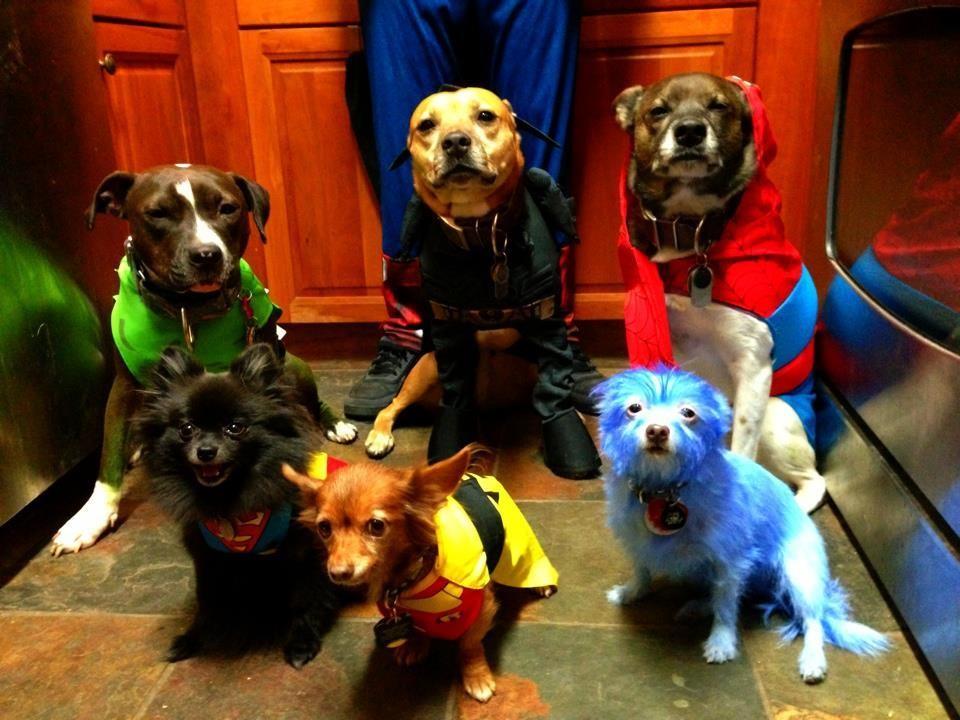 dog-cat-bestfriends-texas-3