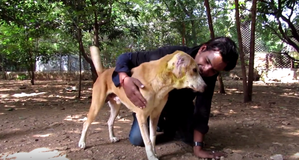 dog-dylan-ear-rescue-6
