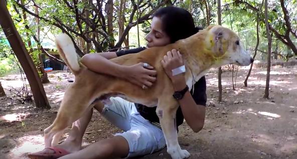 dog-dylan-ear-rescue-7