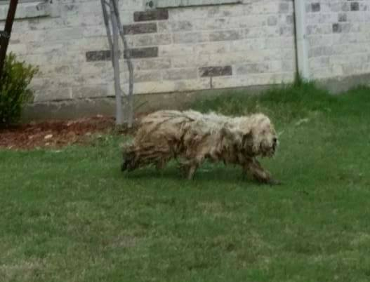 dog-livvy-rescue-texas-2