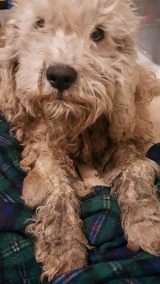 dog-livvy-rescue-texas-4