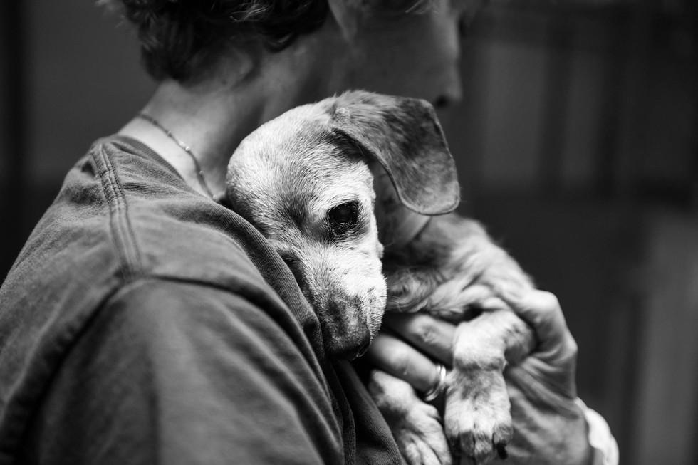 dog_muneca_blind_rescue_2
