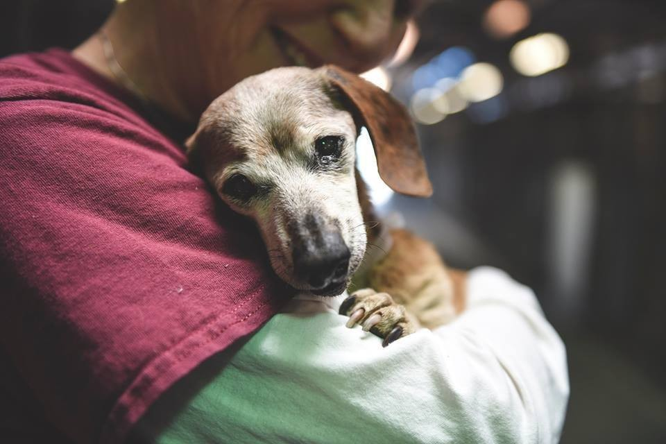 dog_muneca_blind_rescue_3
