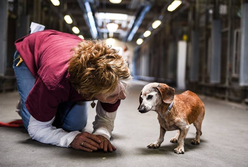 dog_muneca_blind_rescue_4