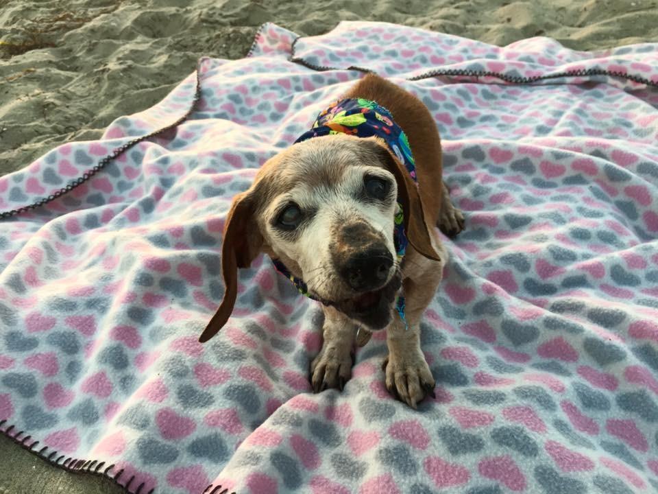 dog_muneca_blind_rescue_5