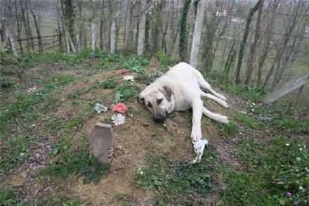dog_zoko_grave_1