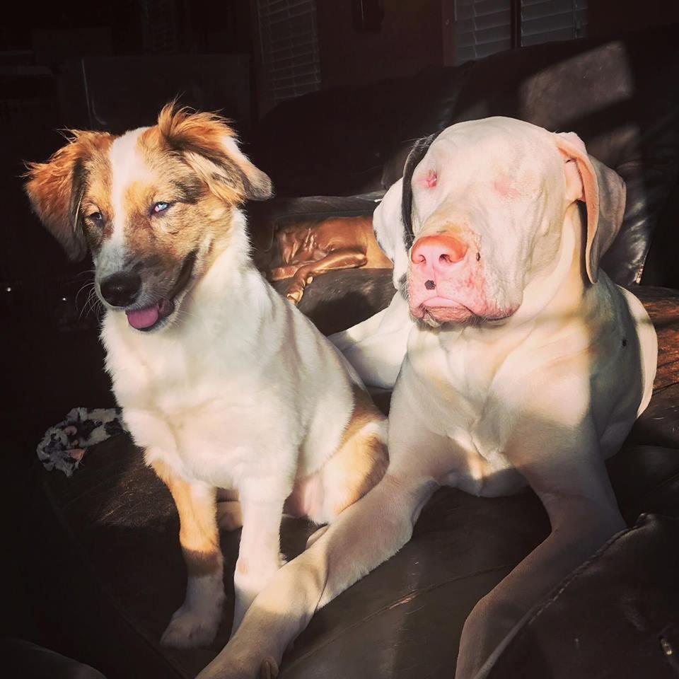 dogs-keller-merle-3