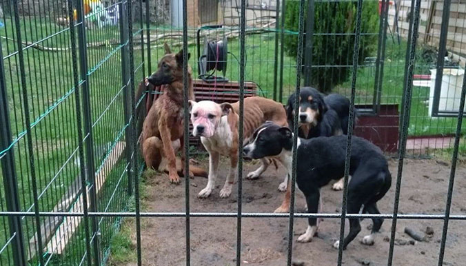 dogs_bourges_starving_rescue_2
