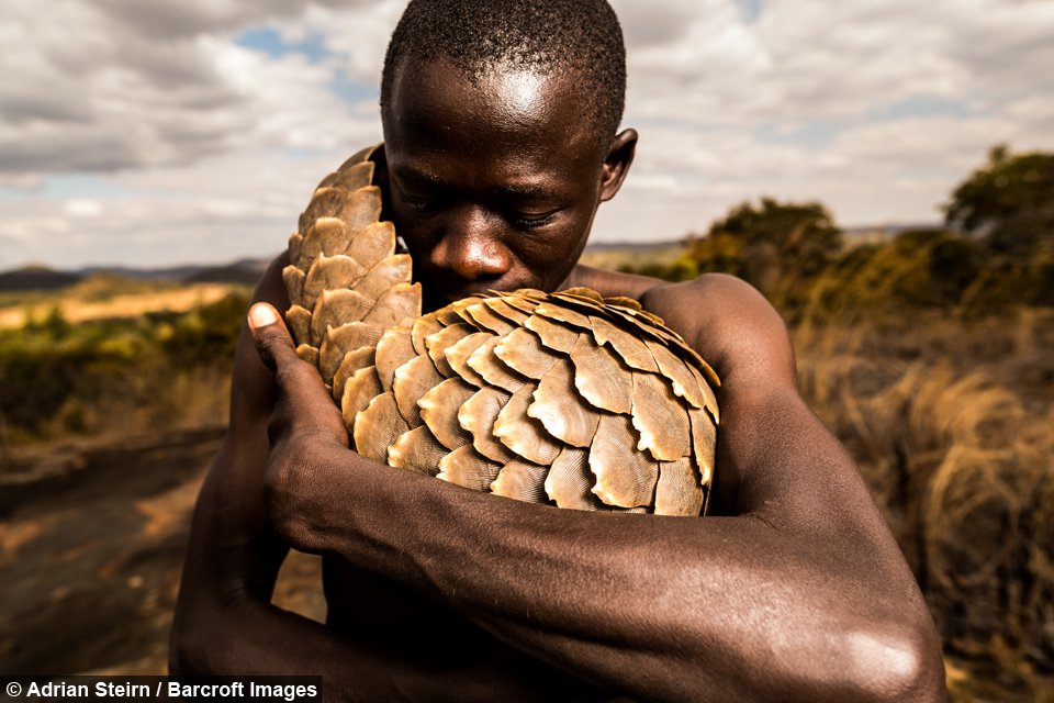 pangolin-rescue-zim-4