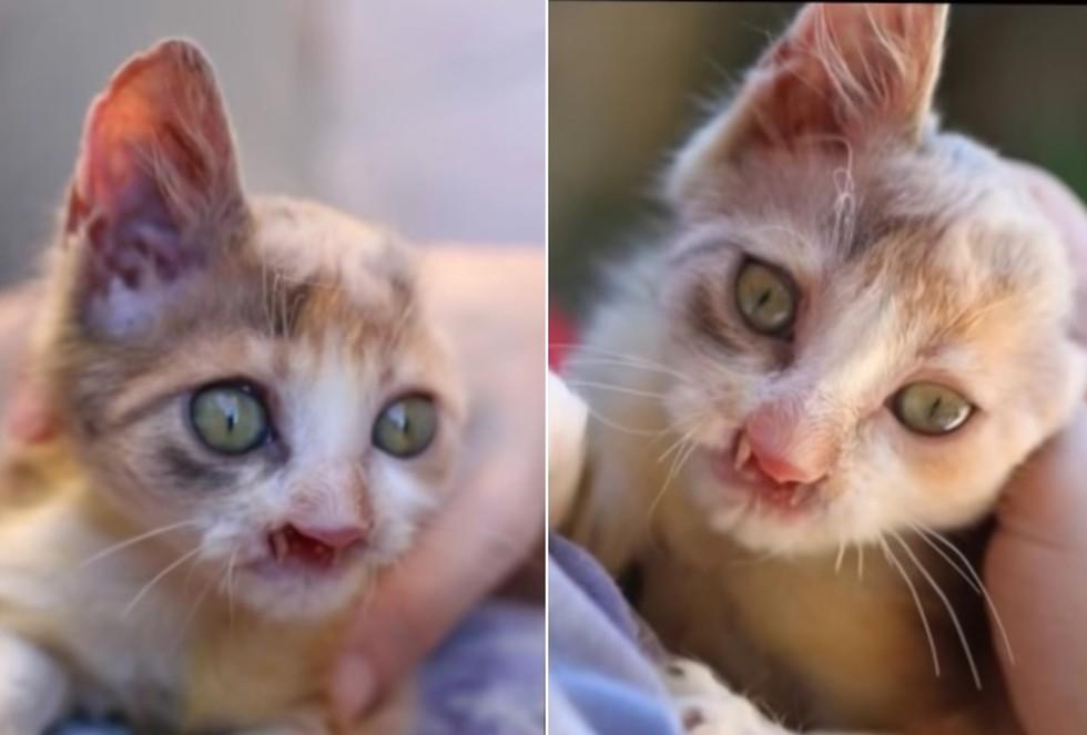 Gülümser_ kitten_jaw_rescue_5