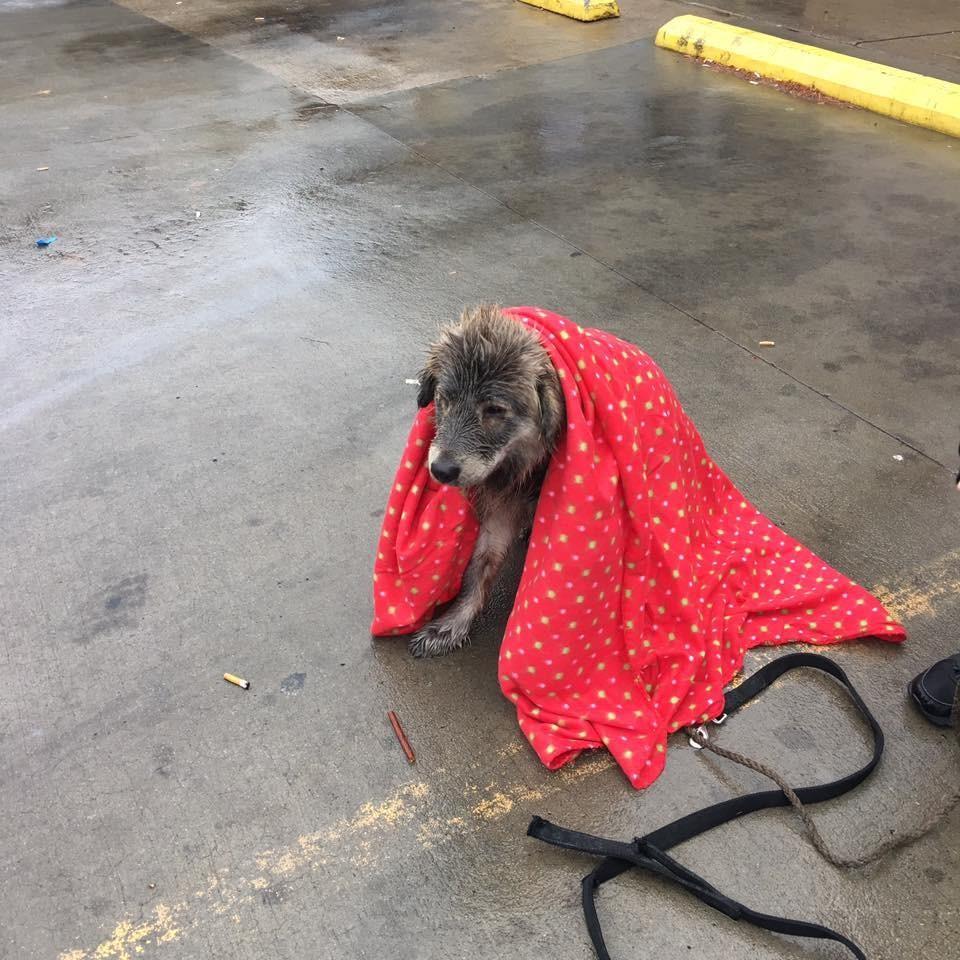 cassie_dog_rain_2