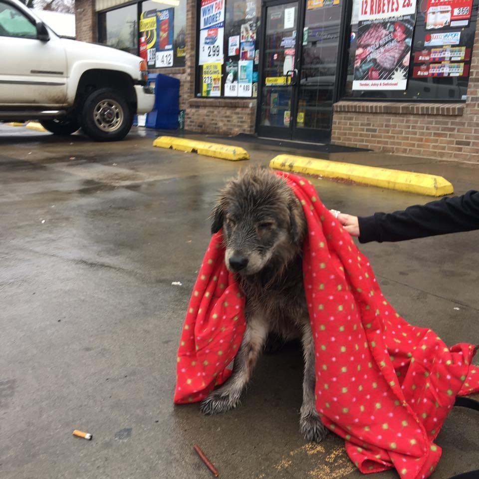 cassie_dog_rain_3