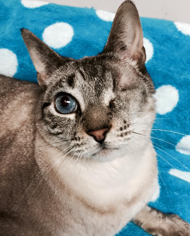 cat_apollo_missing_eye_5