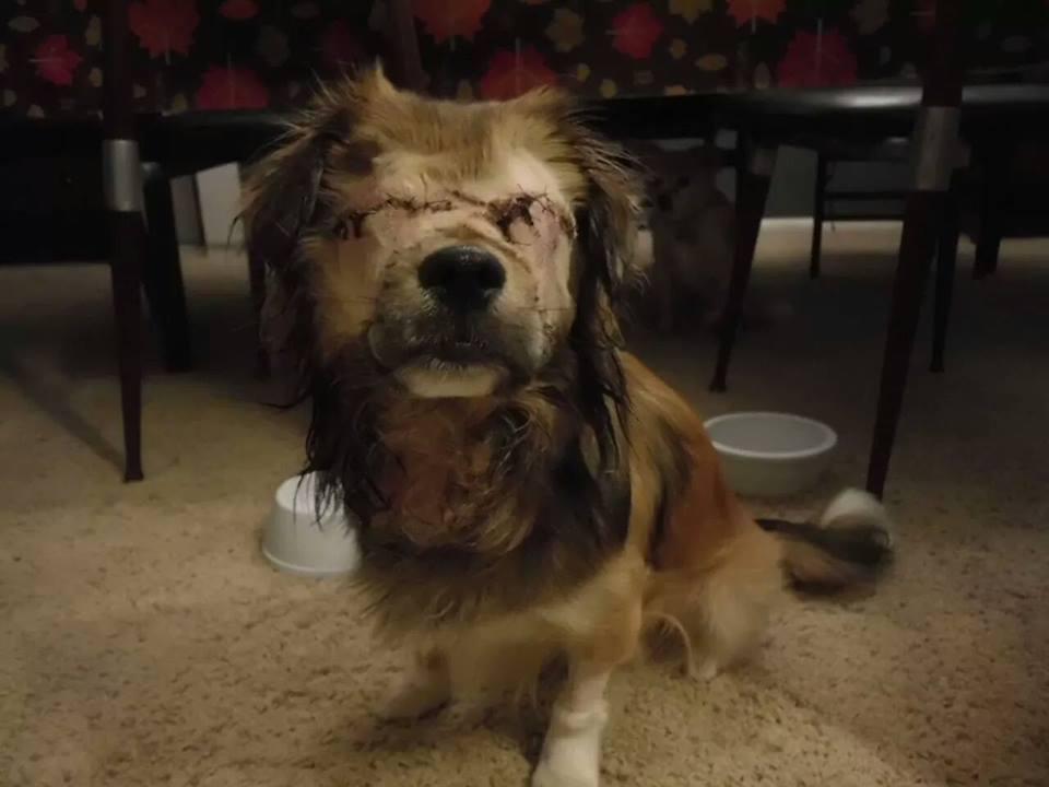 dog-roadrunner-abuse-4