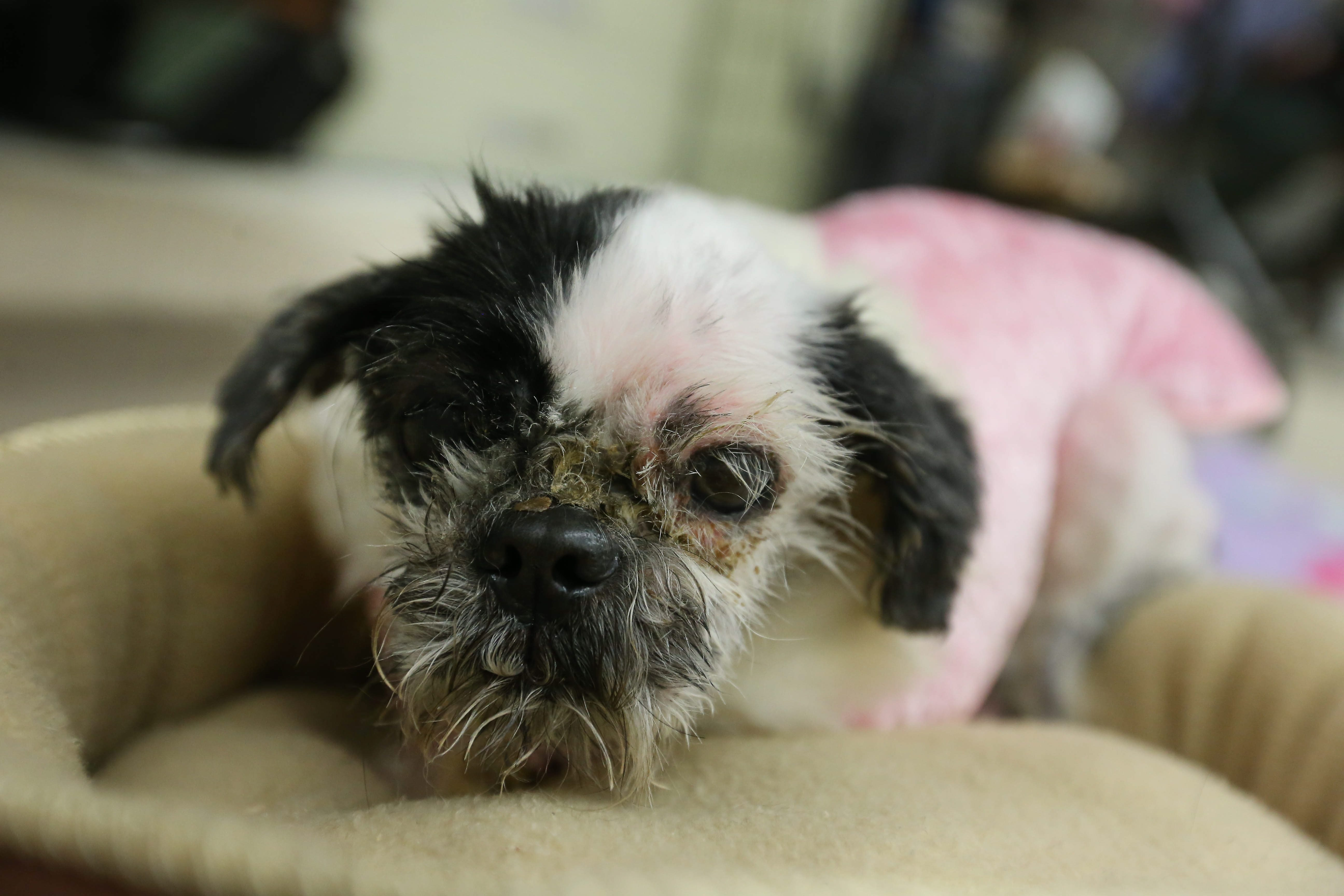 dog_dori_matted_neglect_1