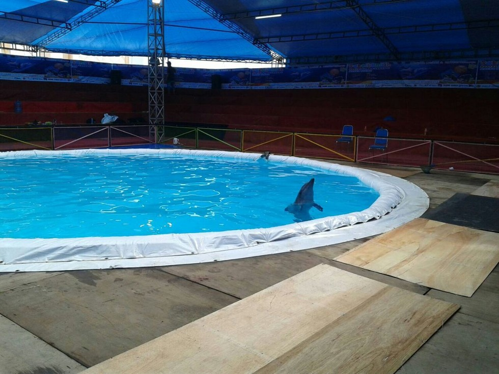 dolphin_project_indonesia_2