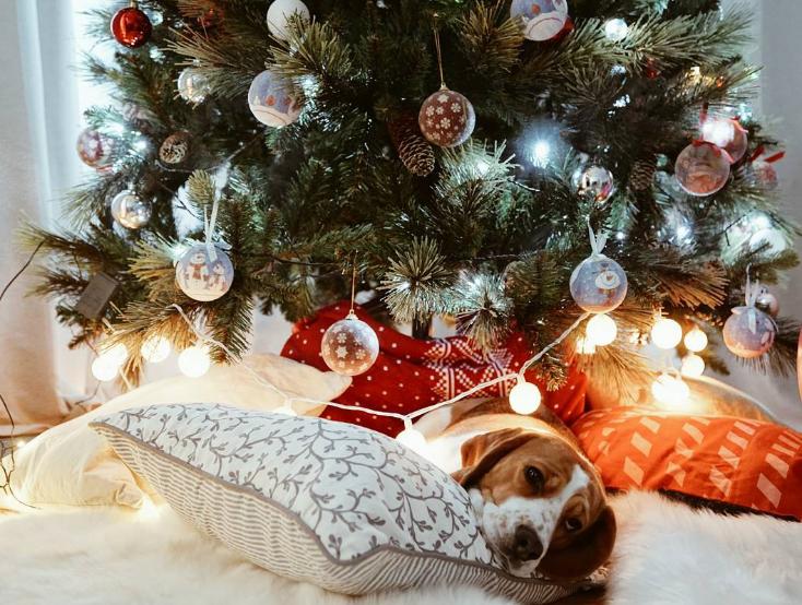 risks_christmas_pets_4