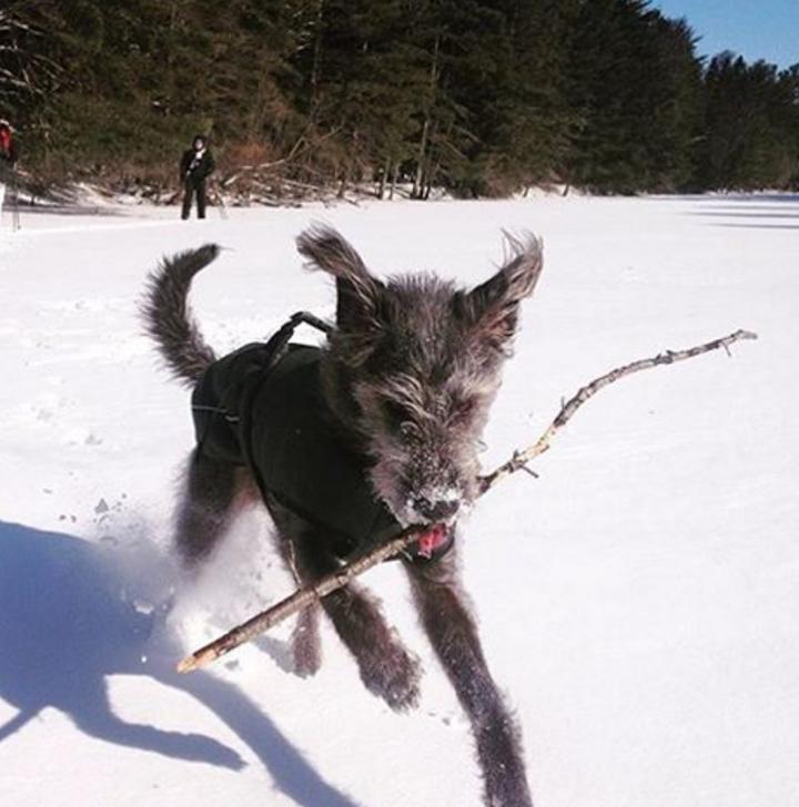 winter_dog_tips_1