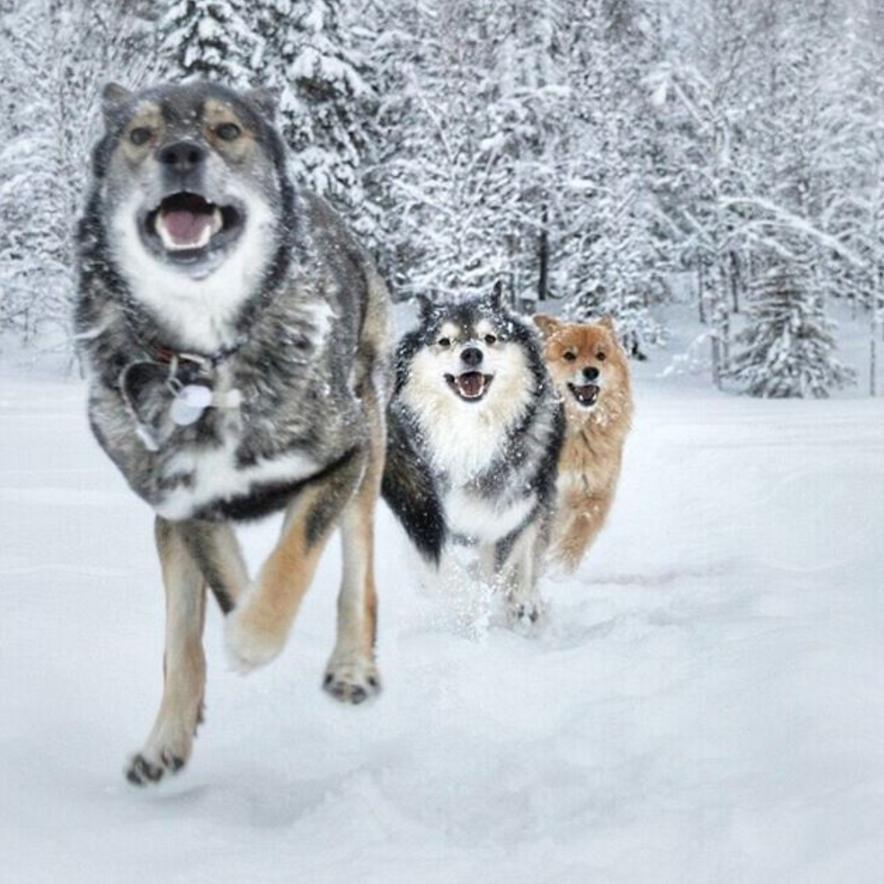winter_dog_tips_5