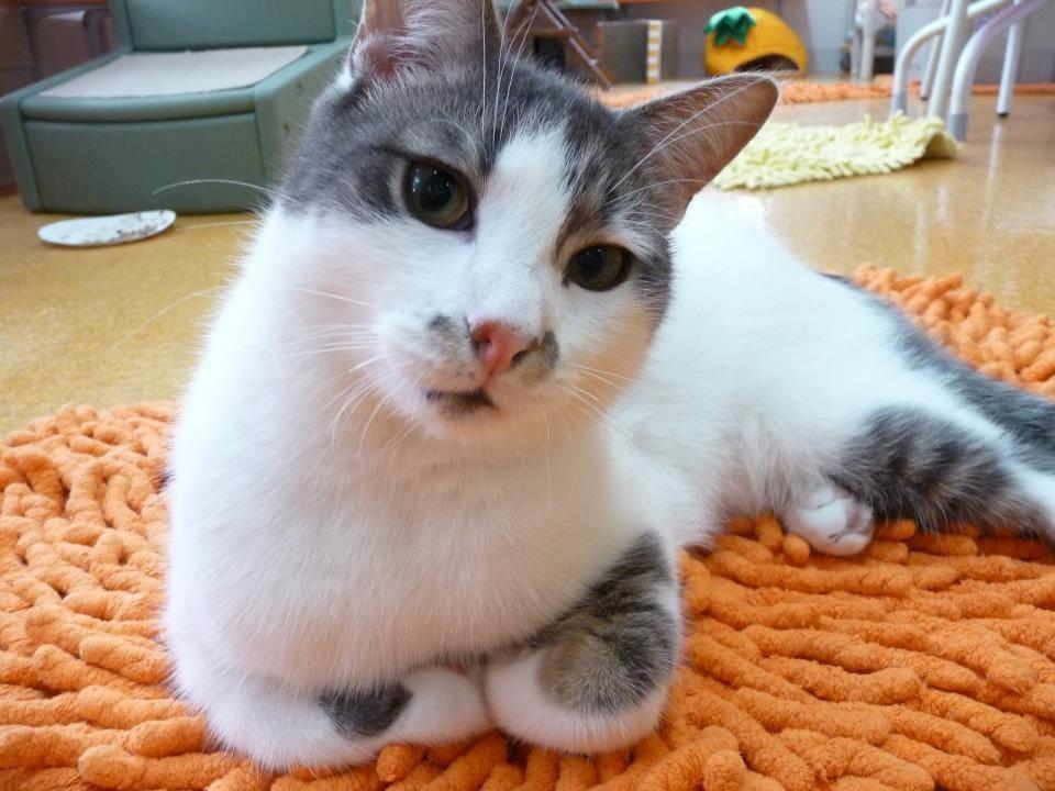 cat-CH-derecho-ohio-1