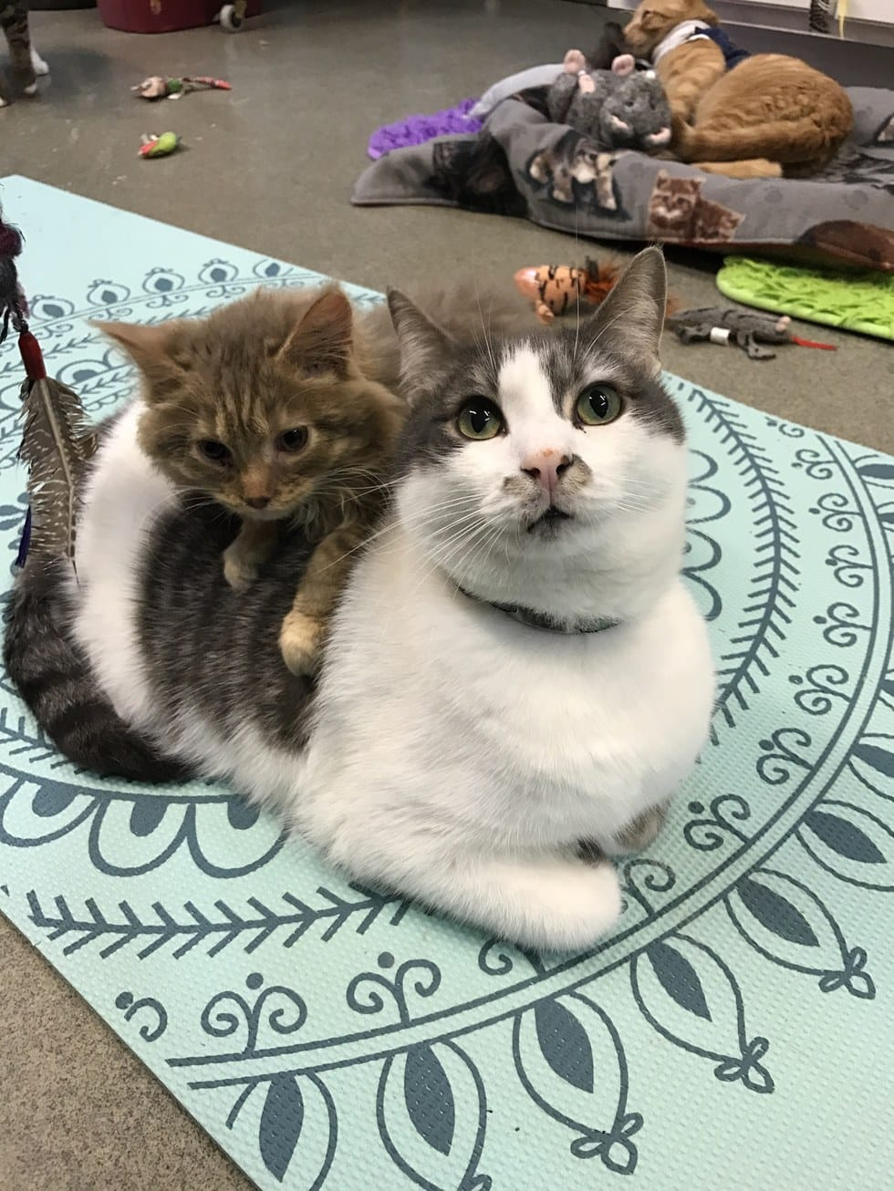 cat-CH-derecho-ohio-4