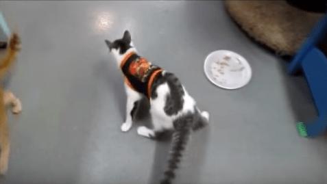 cat-CH-derecho-ohio-7