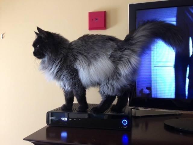 cat-jameson-fur-rescue-1