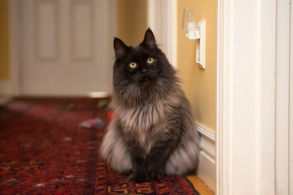 cat-jameson-fur-rescue-2
