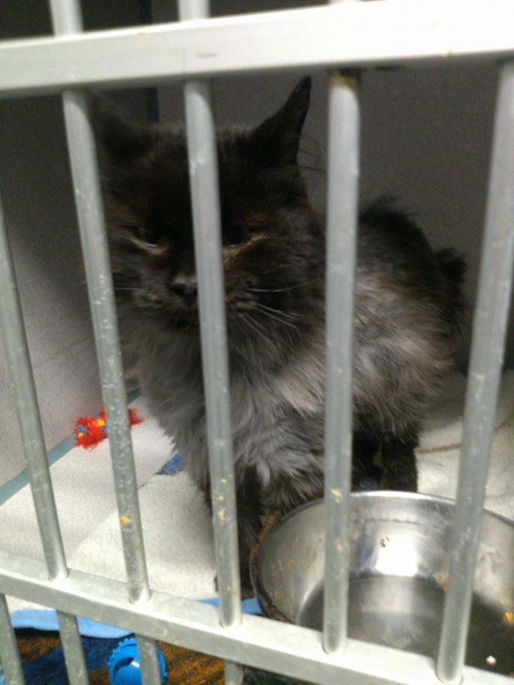 cat-jameson-fur-rescue-3