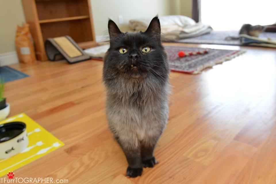 cat-jameson-fur-rescue-4