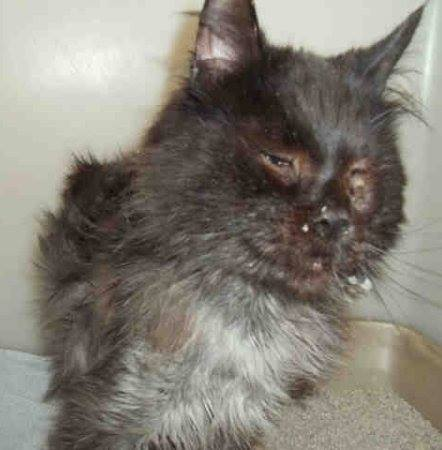 cat-jameson-fur-rescue-5
